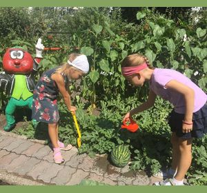 В детском саду вырастили арбузы и гигантскую свёклу